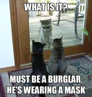 Burglar Meme