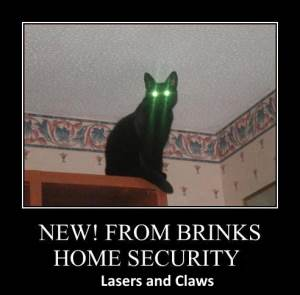 Laser Cat Security Meme